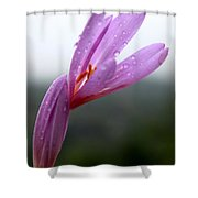 Blooming Purple Flower Shower Curtain