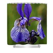 Blooming Purple Iris Shower Curtain