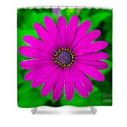 Blooming Purple Shower Curtain