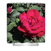 Blooming Rose With New Rose In Garden Shower Curtain