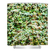 Blooming Shrubs  Shower Curtain