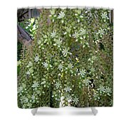 Blooming Succulent Plant. Big And Beautiful Shower Curtain