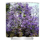 Blooming Tree With Purple Flowers Shower Curtain
