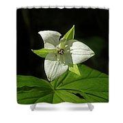 Blooming Trillium Shower Curtain