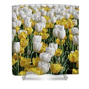 Blooming Tulips As Far As The Eye Can See Shower Curtain