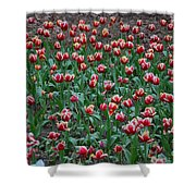 Blooming Tulips Shower Curtain