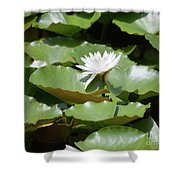 Blooming Waterlily  Shower Curtain