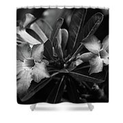 Bloomisted Shower Curtain