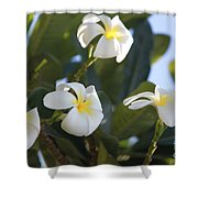 Blooms In Paradise Shower Curtain