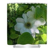 Blooms In Vine Shower Curtain