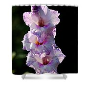 Blooms On A Stick Shower Curtain
