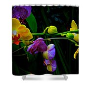 Blooms To Come Shower Curtain