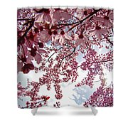 Blossom Artwork Spring Flowers Art Prints Giclee Shower Curtain