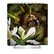 Blossom Hopping 002 Shower Curtain
