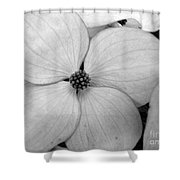 Blossom In Black And White Shower Curtain