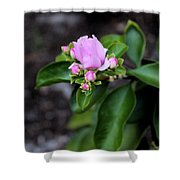 Blossom In Pink Shower Curtain