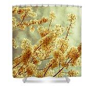 Sakura - Tinted Shower Curtain