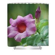 Blossom Of Allamanda Shower Curtain