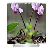 Blossom Of Cyclamens Shower Curtain