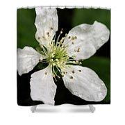 Blossom Square Shower Curtain