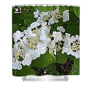 Blossom Sunbath  Shower Curtain