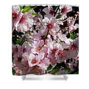 Blossoming Almond Branch Shower Curtain
