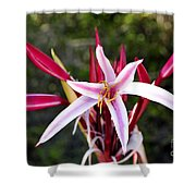 Blossoming Beauty Shower Curtain
