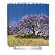 Blossoming Jacaranda Shower Curtain