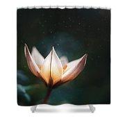 Blossoming Light Shower Curtain