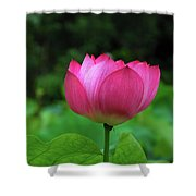 Blossoming Lotus Flower Closeuop Shower Curtain