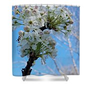 Blossoming Pear Shower Curtain