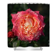Blossoming Rose Shower Curtain