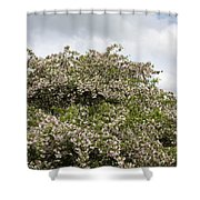 Blossoming Tree Shower Curtain