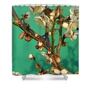 Blossoms Against Green Shower Curtain