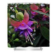 Blossoms And Blooms Shower Curtain