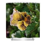 Blossoms And Waterdrops  Shower Curtain
