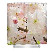 Blossoms Art Print 53 Sunlit Pink Tree Blossoms Macro Springtime Blue Sky  Shower Curtain