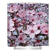 Blossoms Art Prints Nature Pink Tree Blossoms Baslee Troutman Shower Curtain