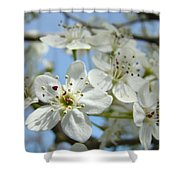 Blossoms Art Prints Whtie Spring Tree Blossoms Blue Sky Baslee Shower Curtain