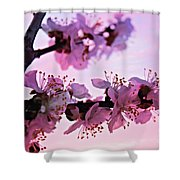 Blossoms At Sunset Shower Curtain
