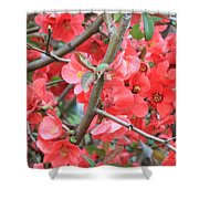 Blossoms Branches And Thorns Shower Curtain