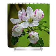 Blossoms In The Rain Shower Curtain