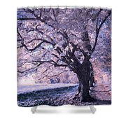 Blossoms In Winter Shower Curtain