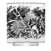 Zinnia Blossoms Shower Curtain