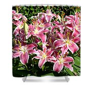 Blossoms Of Chase Lane Shower Curtain