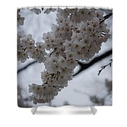 Blossoms Of Dc Shower Curtain