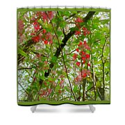 Blossoms Of Spring Time Shower Curtain