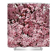 Blossoms Pink Tree Blossoms Giclee Prints Baslee Troutman Shower Curtain
