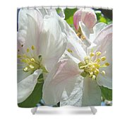 Blossoms Spring Apple Tree Art Prints Baslee Troutman Shower Curtain