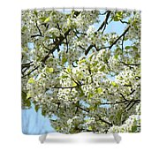 Blossoms Whtie Tree Blossoms 29 Nature Art Prints Spring Art Shower Curtain